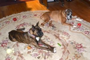Daisy on the left with Blitz.